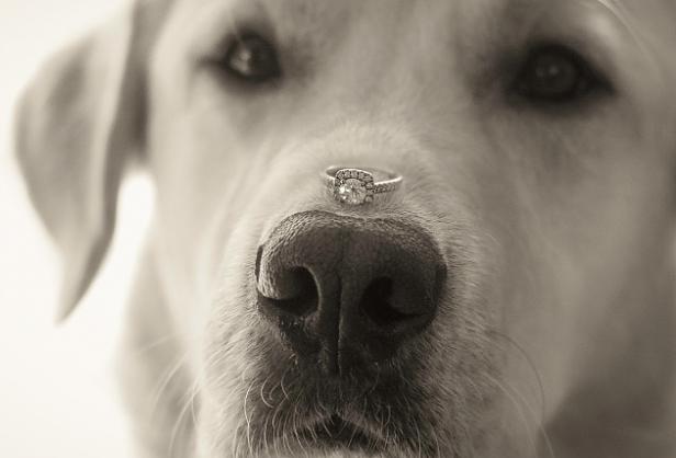 wedding proponsal dog